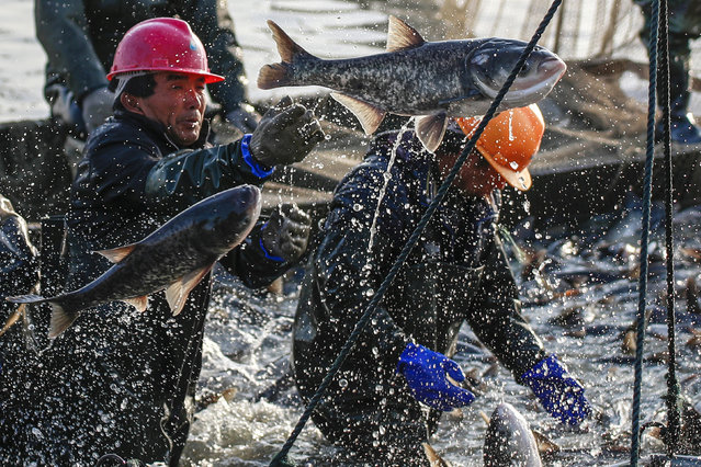 Fish farmers catch fish in Huai'an, Jiangsu province, China December 28, 2017. (Photo by Reuters/China Stringer Network)