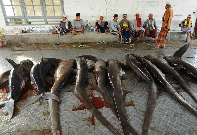 This picture taken on November 9, 2014 shows sharks for sale as vendors wait for customers at a traditional market in Tanjung Luar in Lombok, West Nusa Teggara. (Photo by Sonny Tumbelaka/AFP Photo)
