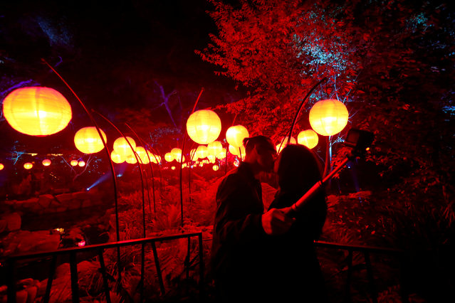 """Visitors Alvin Thai and Ivy Tran kiss as they take a selfie at """"Garden of Good Fortune"""" which is part of the exhibit """"Enchanted: Forest of Light"""" at Descanso Gardens in La Canada Flintridge, California U.S., December 9, 2016. (Photo by Mario Anzuoni/Reuters)"""
