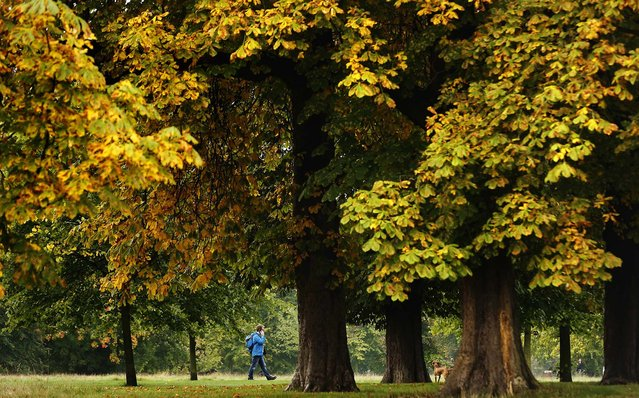 A man walks through Hyde Park in London, October 18, 2013. (Photo by Luke MacGregor/Reuters)