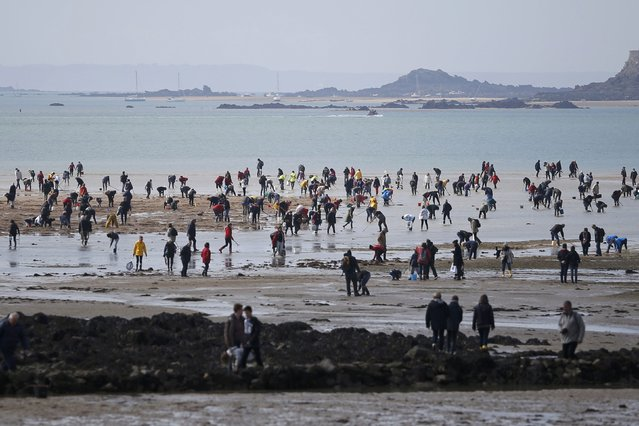 A general view of people who dot the beach as they dig for shellfish during a record low tide in Saint Malo, western France, March 21, 2015. (Photo by Stephane Mahe/Reuters)