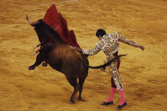Spanish bullfighter Miguel Angel Perera performs a pass to a bull during a bullfight at the Malagueta bullring in Malaga, southern Spain, April 4, 2015. (Photo by Jon Nazca/Reuters)