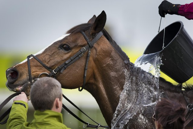 Rathlin is cooled down after finishing third in the Topham Steeple Chase during Aintree race meeting's Ladies Day the day before the Grand National horse race at Aintree Racecourse Liverpool, England, Friday, April 10, 2015. (Photo by Jon Super/AP Photo)