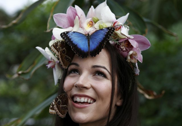 "Model Jessie May Smart poses with Blue Morpho butterflys, ahead of the opening of, ""Butterflies in the Glasshouse"", at RHS Wisley in Wisley, Britain, January 13, 2017. (Photo by Peter Nicholls/Reuters)"