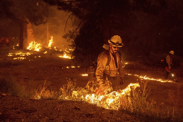 While battling the Caldor fire, firefighters burn vegetation to create a control line along Highway 50 in Eldorado National Forest, Calif., on Thursday, August 26, 2021. (Photo by Noah Berger/AP Photo)