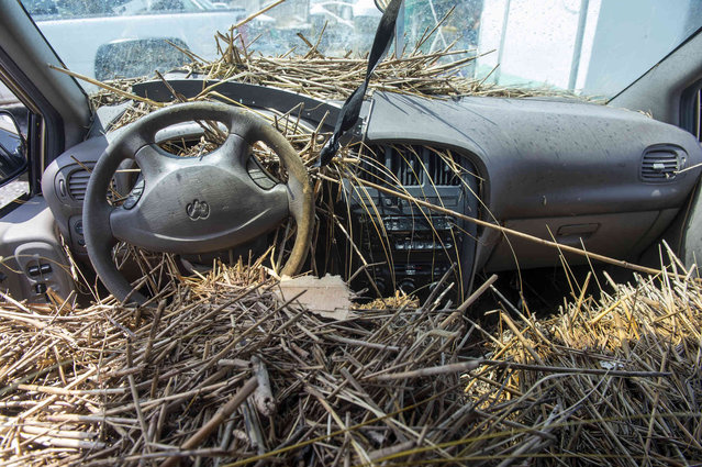 An abandoned car is seen full of marsh grass along Highway 23 in Plaquemines Parish, La., over a week after Hurricane Ida on Tuesday, September 7, 2021. (Photo by Chris Granger/The Times-Picayune/The New Orleans Advocate via AP Photo)
