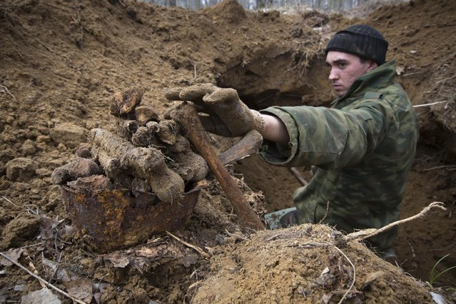 In this photo taken Sunday, May 3, 2015, a member of an excavation team searching for the remains of Soviet soldiers killed during WWII, uncovers remains of Soviet soldiers in a former trench near the village of Gaitolovo, 60 km (37 miles) east of  St. Petersburg, Russia. Soviet troops fought in the area from 1941 to 1944 to try to break the siege of Leningrad, as St. Petersburg was called at the time. Hundreds of thousands were killed. (Photo by Dmitry Lovetsky/AP Photo)