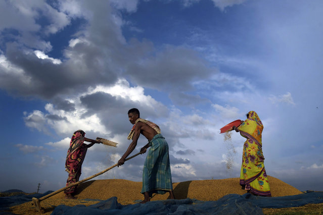 A family dries up their harvested Rabi crop on the outskirts of Guwahati, India, 24 June 2019. (Photo by EPA/EFE/Stringer)