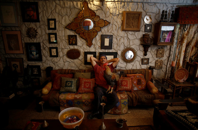 "Martin Herrera, poses with his favorite rooster ""Paquito"" in his house in San Jose, Costa Rica April 27, 2017. (Photo by Juan Carlos Ulate/Reuters)"