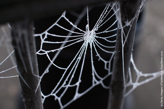 A spider's web is covered in frost in sub-zero temperatures