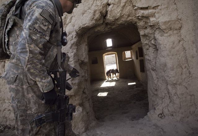 Afghanistan: Dogs of War Part 2