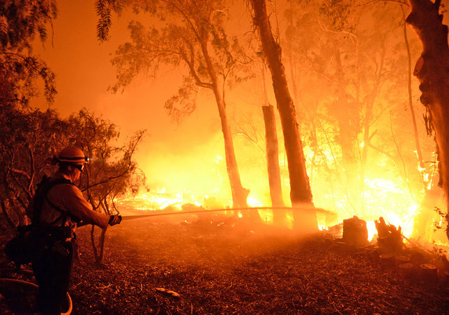 In this photo provided by the Santa Barbara County Fire Department, a firefighter knocks down flames as they approach a ranch near the Las Flores Canyon area west of Goleta, Calif., in the early morning hours of Thursday, June 16, 2016. The wildfire burning in rugged coastal canyons west of Santa Barbara is growing as it feeds on vegetation that hasn't burned in 70 years. (Photo by Mike Eliason/Santa Barbara County Fire Department via AP Photo)