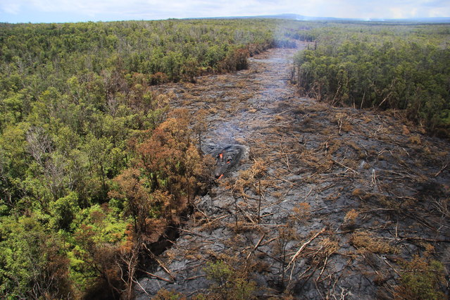 In this September 1, 2014 photo released by the U.S. Geological Survey, fluid lava streams from the June 27 lava flow from the Kilauea volcano in Pahoa, Hawaii. The June 27 lava flow is named for the date it began erupting from a new vent. The Hawaiian Volcano Observatory issued a warning Thursday, Sept. 4, 2014 to a rural community in the path of a lava flow on Hawaii's Big Island, as the molten rock moved to within a mile of homes.  (Photo by AP Photo/U.S. Geological Survey)