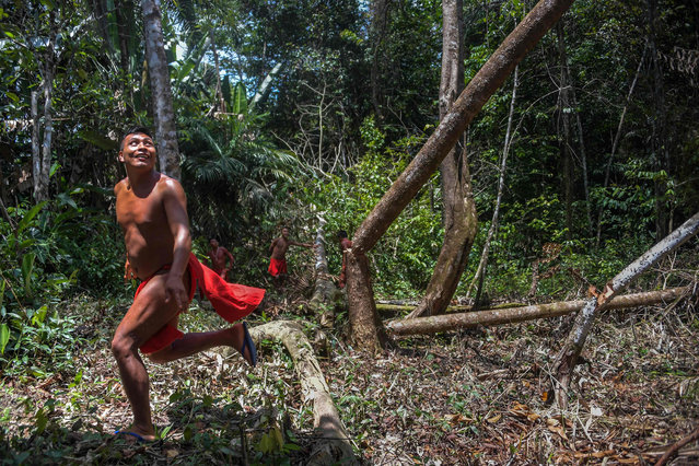 A Waiapi man runs after cutting down a tree to make a manioc field, at the Waiapi indigenous reserve in Amapa state in Brazil on October 14, 2017. (Photo by Apu Gomes/AFP Photo)