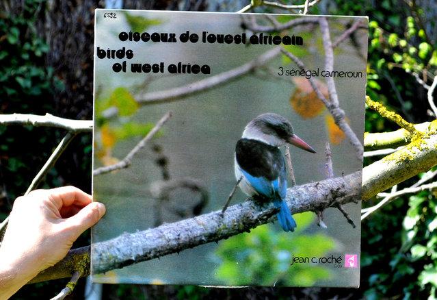 """""""Oiseaux de l'ouest Africain"""". (Le Guit)"""