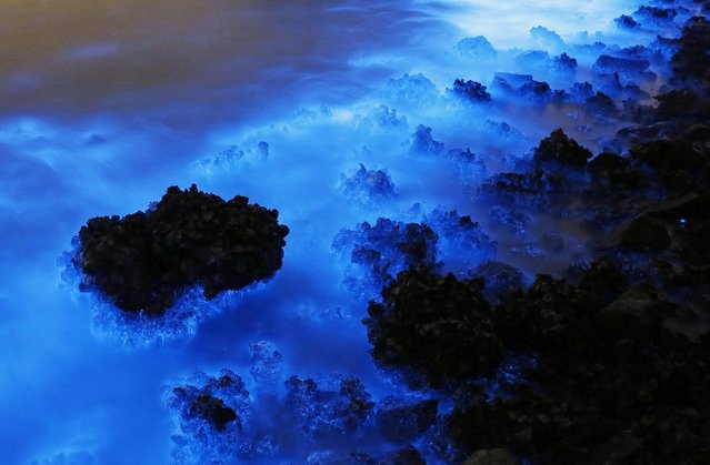 This Thursday, January 22, 2015 photo made with a long exposure shows the glow from a Noctiluca scintillans algal bloom along the seashore in Hong Kong. The luminescence, also called Sea Sparkle, is triggered by farm pollution that can be devastating to marine life and local fisheries, according to University of Georgia oceanographer Samantha Joye. (Photo by Kin Cheung/AP Photo)