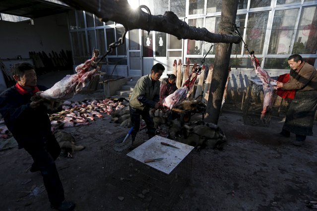 Workers peel the furs off fox carcasses in the small yard of a fox farm in Nanzhuang village, Shandong province, China, December 11, 2015. (Photo by William Hong/Reuters)