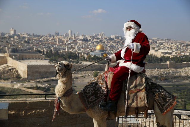 Israeli-Arab Issa Kassissieh wears a Santa Claus costume as he rides a camel and poses for the media during an annual Christmas tree distribution by the Jerusalem municipality on the Mount of Olives in Jerusalem. The Dome of the Rock is seen in the background. December 21, 2015. (Photo by Ammar Awad/Reuters)