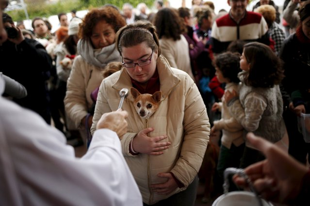 A woman holds her dog as it is blessed by a priest outside San Anton Church in the neighborhood of Churriana, in Malaga, near Malaga, Spain, January 17, 2016. (Photo by Jon Nazca/Reuters)