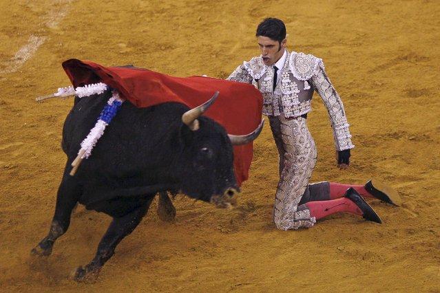 Spanish bullfighter Alejandro Talavante performs a pass to a bull during a bullfight at the Malagueta bullring in Malaga, southern Spain, April 4, 2015. (Photo by Jon Nazca/Reuters)