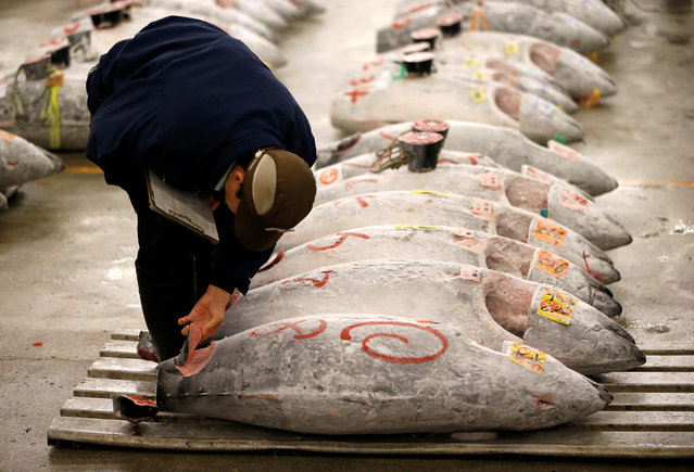 A wholesaler checks the quality of frozen tuna displayed at the Tsukiji fish market before the New Year's auction in Tokyo, Japan, January 5, 2017. (Photo by Issei Kato/Reuters)
