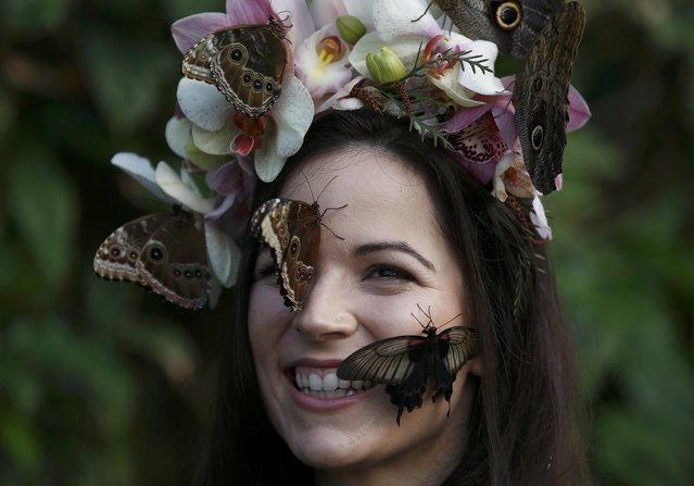 """Model Jessie May Smart reacts to a Great Yellow Mormon (R) and Blue Morpho butterflies, as she poses for pictures ahead of the opening of, """"Butterflies in the Glasshouse"""", at RHS Wisley in Wisley, Britain, January 13, 2017. (Photo by Peter Nicholls/Reuters)"""