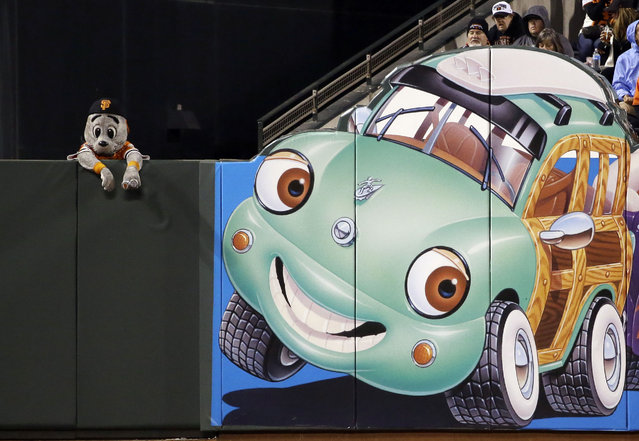 San Francisco Giants mascot Lou Seal watches the team's baseball game against the Colorado Rockies from behind the left field wall Tuesday, April 14, 2015, in San Francisco. (Photo by Marcio Jose Sanchez/AP Photo)