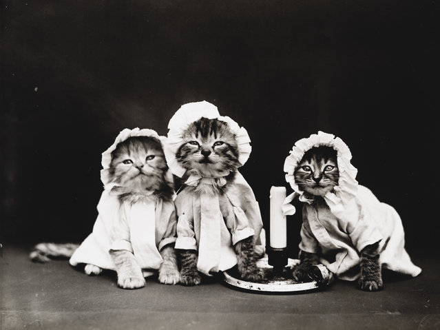 Photograph shows three kittens wearing pajamas with a candle, 1914. (Photo by Harry Whittier Frees/Library of Congress)