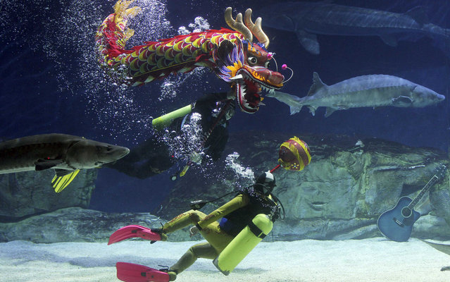 Divers perform an underwater dragon dance next to Chinese sturgeons to welcome the upcoming Chinese Lunar New Year at Beijing Aquarium in Beijing, January 24, 2014. According to the Chinese lunar calendar, the Chinese New Year, which welcomes the year of the horse, falls on January 31. (Photo by Reuters/China Daily)