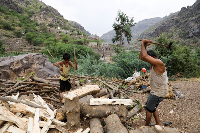 Ali al-Emadi, who works as a lumberjack and his nephew, split firewood with axes at their village in Khamis Banisaad district of al-Mahweet province, Yemen, June 10, 2021. (Photo by Khaled Abdullah/Reuters)