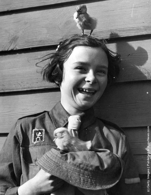 A young Brownie Girl Guide holding a duckling whilst another is standing on her head, 1939