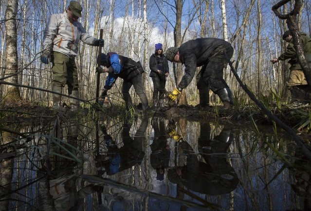 In this photo taken Sunday, May 3, 2015, members of an excavation team searching for the remains of Soviet soldiers killed during WWII, uncover remains of Soviet soldiers in a swamp near the village of Gaitolovo, 60 km (37 miles) east of  St. Petersburg, Russia. (Photo by Dmitry Lovetsky/AP Photo)