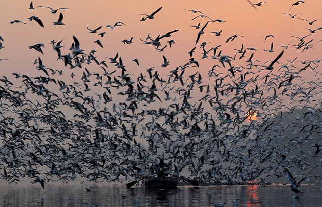 A man rides a boat as seagulls fly over the waters of the river Yamuna early morning in New Delhi, India, November 21, 2018. (Photo by Anuwar Hazarika/Reuters)