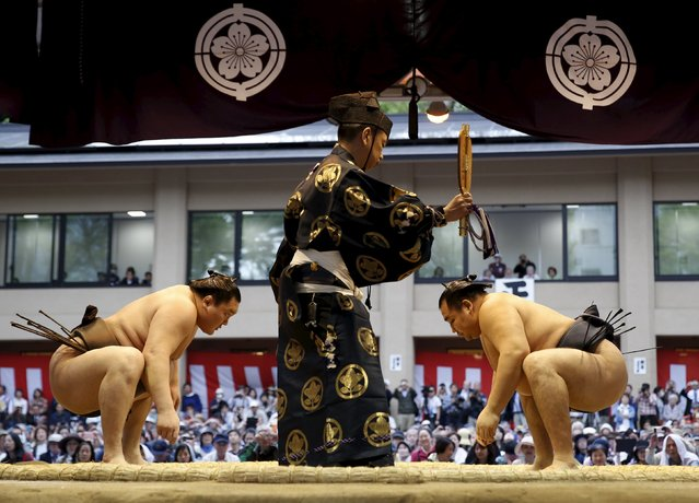 "Mongolia-born grand sumo champions Yokozuna Hakuho (L) and Kakuryu prepare to compete during the annual ""Honozumo"" ceremonial sumo tournament dedicated to the Yasukuni Shrine in Tokyo, Japan, April 18, 2016. (Photo by Yuya Shino/Reuters)"
