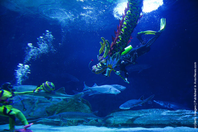 People dressed as a Chinese Dragon, swim in water at the Beijing Aquarium