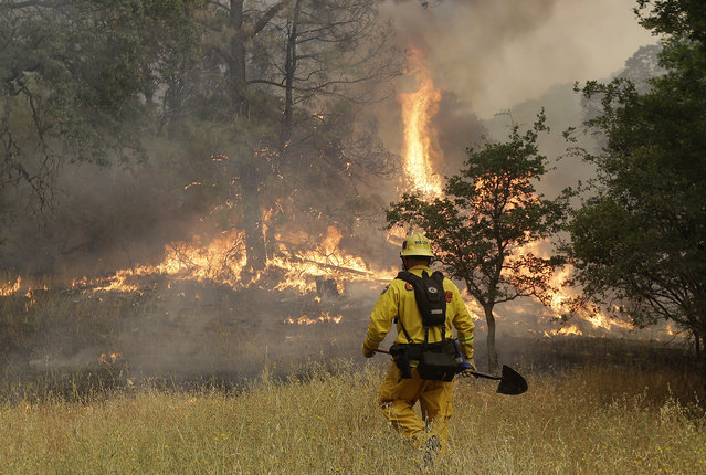 Cal Fire engineer Johnny Miller stands in front of a fire off of Morgan Valley Road near Lower Lake, Calif., Friday, July 31, 2015. The golden hills of California were being blackened Friday by a series of wildfires egged on by bone-dry vegetation, triple-digit temperatures and gusting winds. (Photo by Jeff Chiu/AP Photo)