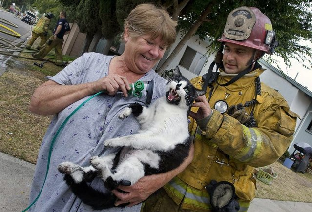 Garden Grove Fire Capt. Albert Acosta checks on the welfare of a cat named Magic, as owner Norma Arbotast finishes the cat's oxygen treatment, on June 21, 2012 in Garden Grove, Calif