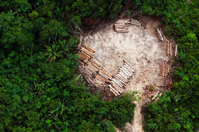 An aerial view of indigenous land in the region of Altamira in the Brazilian Amazon, cleared for illegal logging. (Photo by Daniel Beltra/Photographers Against Wildlife Crime/Wildscreen/The Guardian)