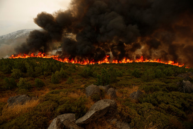 An active front of a forest fire near Arouca, Portugal August 13, 2016. (Photo by Rafael Marchante/Reuters)