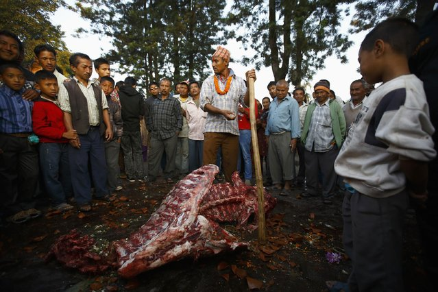 """Devotees gather in front of a buffalo carcass during the sacrificial ceremony held to mark the """"Dashain"""", Hinduism's biggest religious festival in Bhaktapur October 3, 2014. (Photo by Navesh Chitrakar/Reuters)"""