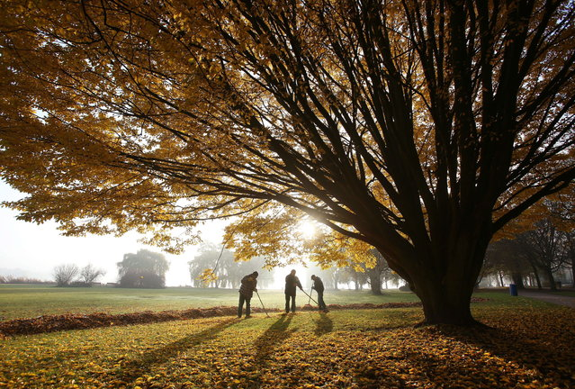 Men sweep leaves underneath a tree in the early morning autumn sun at the Alster in Hamburg, northern Germany, on November 15, 2012. (Photo by Christian Charisius/AFP Photo)