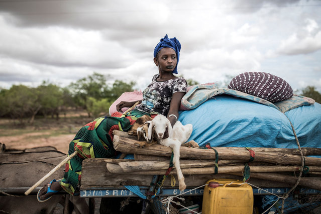 A Fulani Pastoralist carries two baby sheep on her donkey cart as her family move on northwards in Barkedji, Senegal on July 21, 2020. Thousands of Pastoralist families will start the movement north in the next weeks. With the first rains comes fresh grass and water for the Fulani herders' livestock, it also marks the point where most of the Pastoralist will move northwards until the dry season. (Photo by John Wessels/AFP Photo)