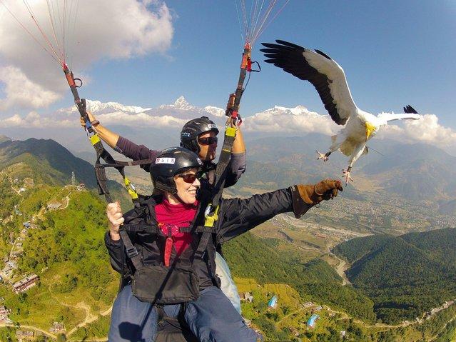 """""""Parahawking in Nepal by Scott Mason. Share the Sky"""". (Photo by Scott Mason)"""