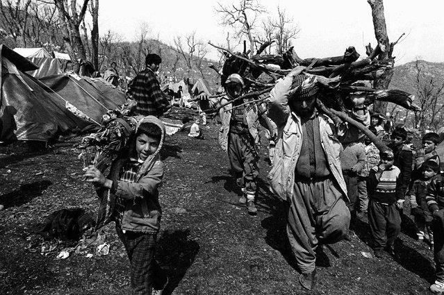 Iraqi Kurdish refugees collect firewood in Cukurca refugee camp in Turkey April 7, 1991. (Photo by Srdjan Zivulovic/Reuters)
