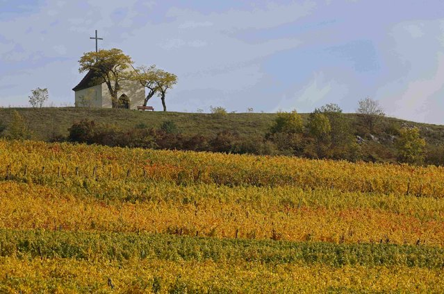 The Bolenberg chapel sits on a rise overlooking vineyards where leaves change colors to mark a change in the season in Orschwihr in the Alsace region of France, October 12, 2015. (Photo by Jacky Naegelen/Reuters)