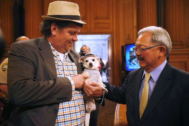 """San Francisco Mayor Ed Lee (R) greets Frida, a female Chihuahua, as she is held by owner Dean Clark, before the San Francisco Board of Supervisors issues a special commendation naming Frida """"Mayor of San Francisco for a Day"""" in San Francisco, California November 18, 2014. (Photo by Stephen Lam/Reuters)"""