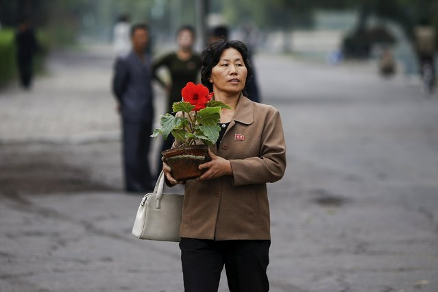 A woman carries a flower in central Pyongyang October 8, 2015. (Photo by Damir Sagolj/Reuters)