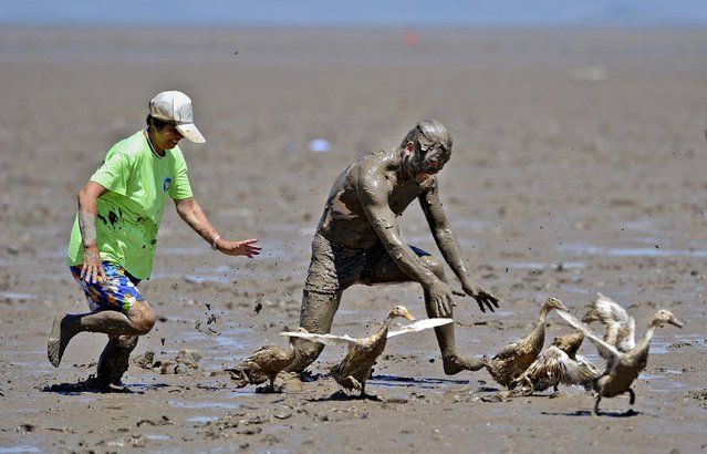 Participants try to catch ducks in a muddy field, during a competition at a park in Daishan county, Zhejiang province, on July 17, 2013. The competition is part of a sea mud carnival held by the local tourism organization. (Photo by Reuters/China Daily)