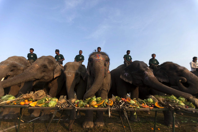 Nepalese Mahuts with their elephant participate in elephant picnic as a part of the12th Chitawan Elephant Festival at Sauhara, Chitawan, some 154 kilometer from the capital of Kathmandu, Nepal, 28 December 2015. More than 80 elephant with their Mahuts joined the elephant picnic. The five-day festival began on 26 December to spread awareness about wildlife and promote tourism. (Photo by Hemanta Shrestha/EPA)