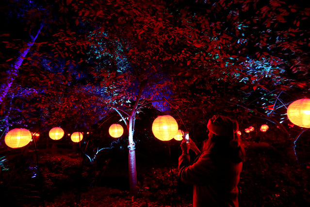 """A visitor uses her mobile phone at """"Garden of Good Fortune"""" which is part of the exhibit """"Enchanted: Forest of Light"""" at Descanso Gardens in La Canada Flintridge, California U.S., December 9, 2016. (Photo by Mario Anzuoni/Reuters)"""